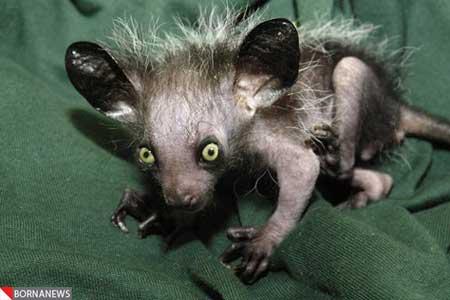 زشت و بدشکل ترین حیوانات جهان را ببینید! (+عکس) ، www.irannaz.com