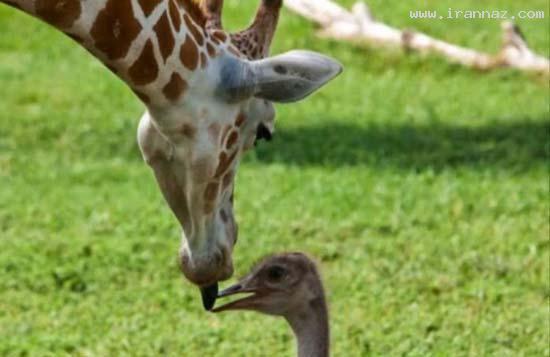 عکس هایی بی نظیر و بسیار دیدنی از معجزه عشق! ، www.irannaz.com