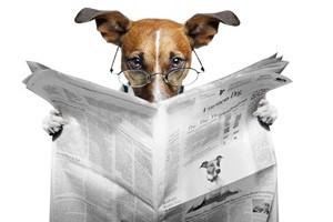 تصویری خارق العاده از تشخیص زلزله توسط یک سگ!
