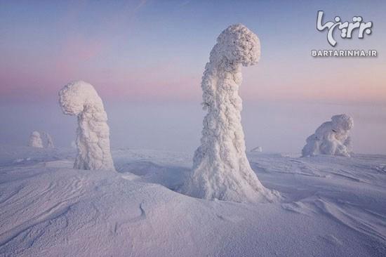 738739ac15 تصاویری جالب و دیدنی از درختان یخ زده