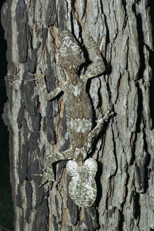 عکس هایی عجیب و دیدنی از مخفی شدن خزندگان ، www.irannaz.com