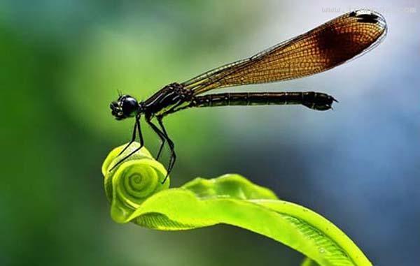 عکس هایی از هنرنمایی خداوند در خلق موجودات زیبا ، www.irannaz.com
